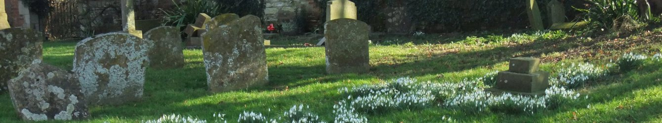 Snowdrops, Chilton Church