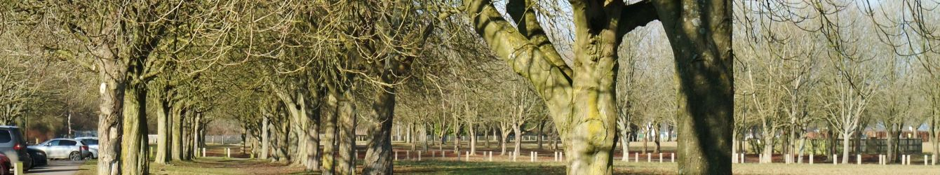 Chestnut Trees at Chilton Field